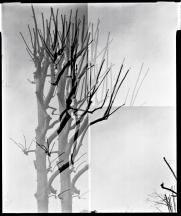 tree#05 w